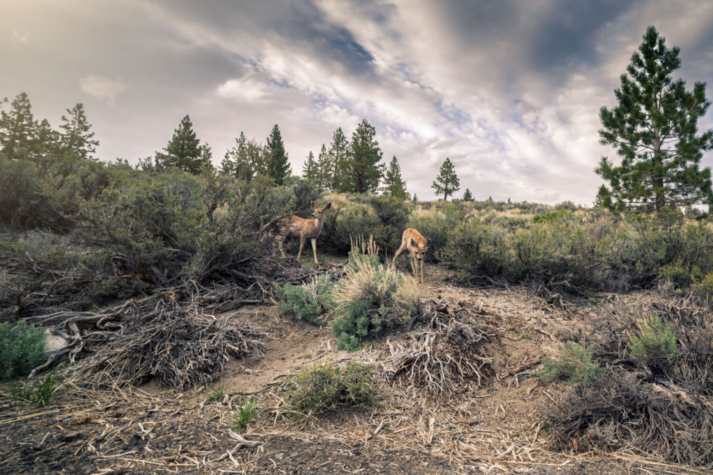 Blog z USA 2016 - Elkové