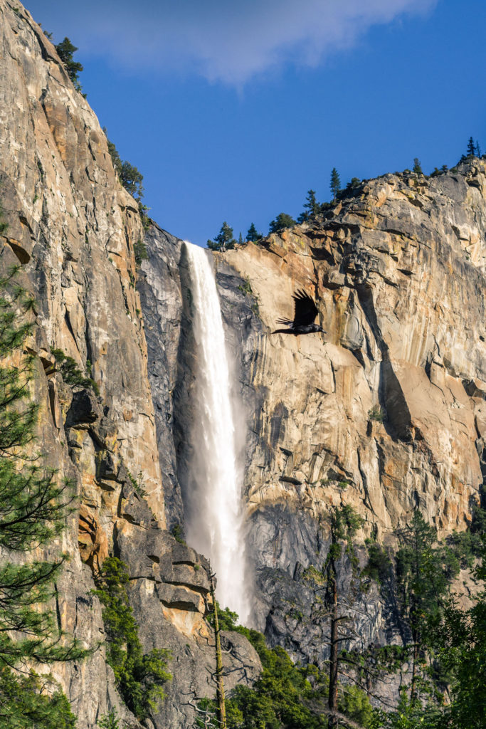 Blog z USA 2016 - Yosemite