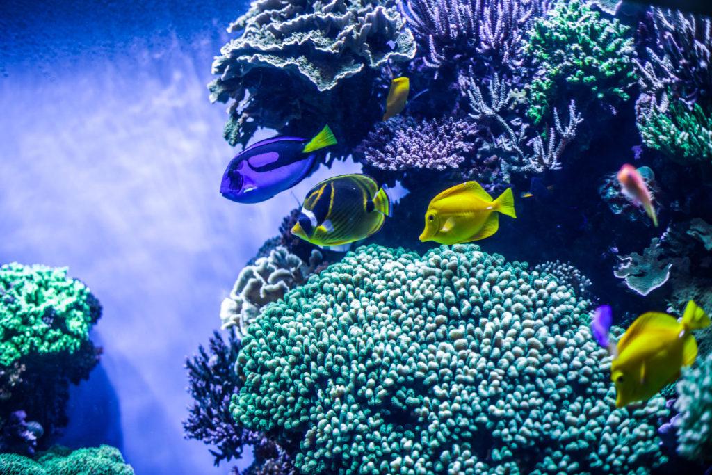 Blog z USA 2016 - Monterey akvárium