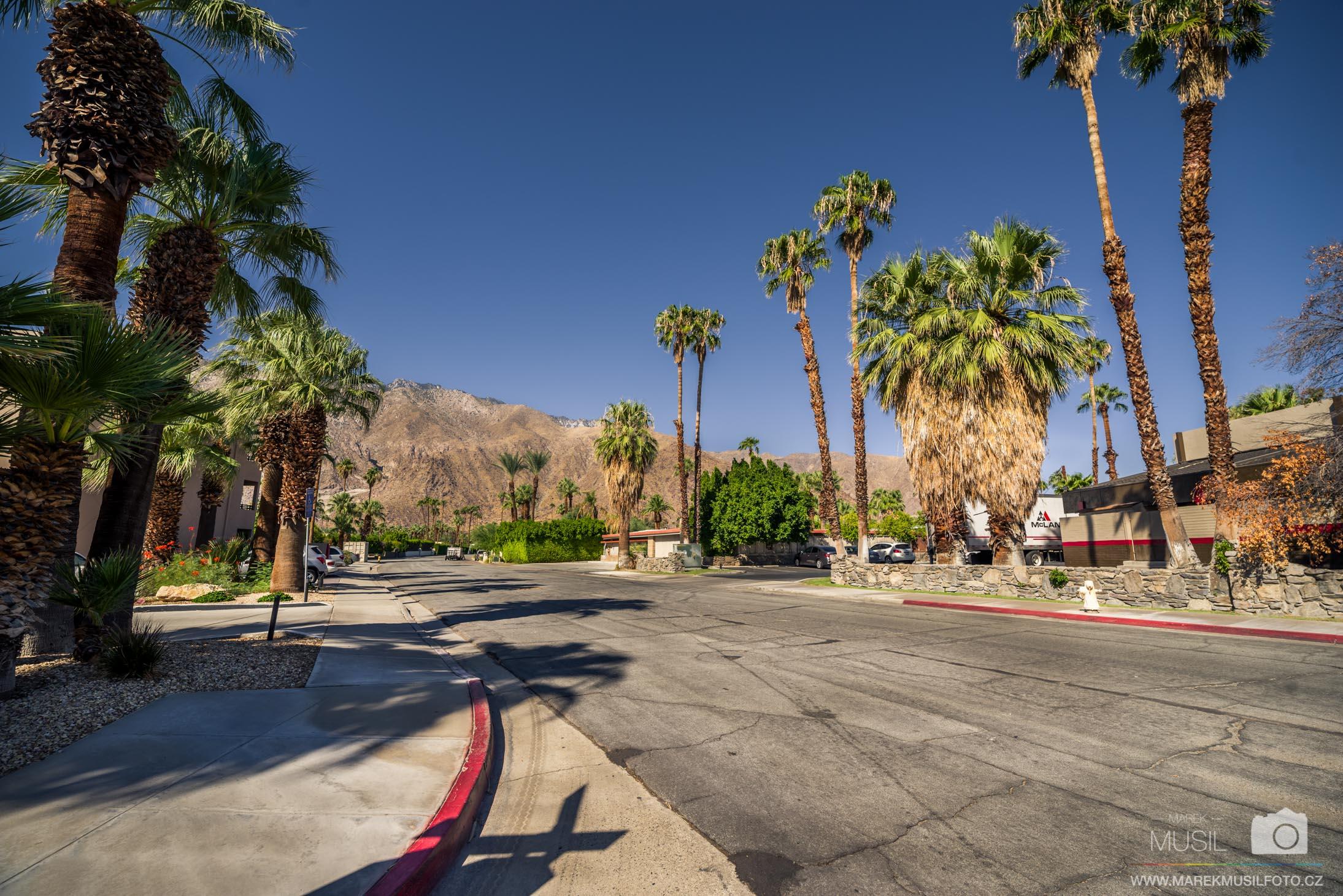Palm Springs Palms